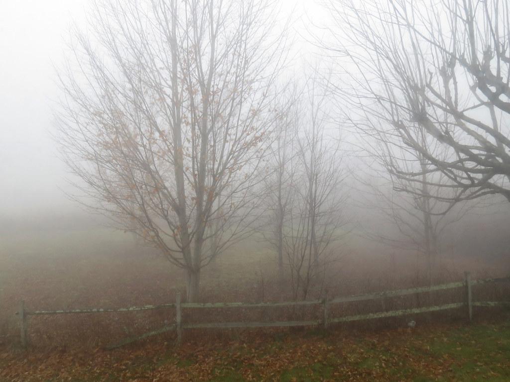 Foggy Day Foggy Day | by