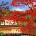 金阁寺 Kinkakuji