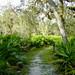 Myakka-Boylston Nature Trail-6