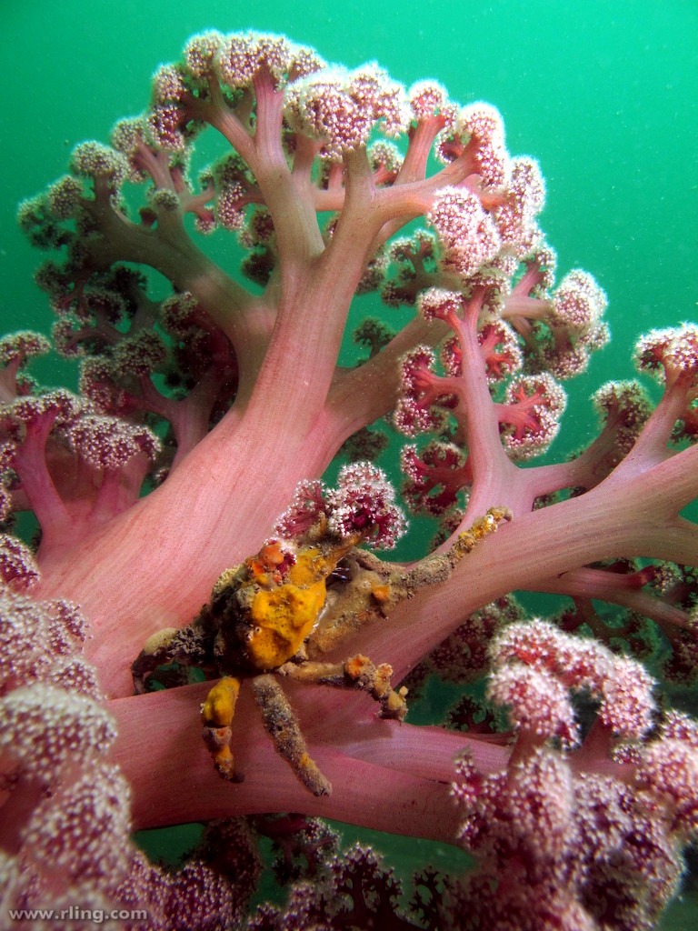 decorator crab and sponge relationship help