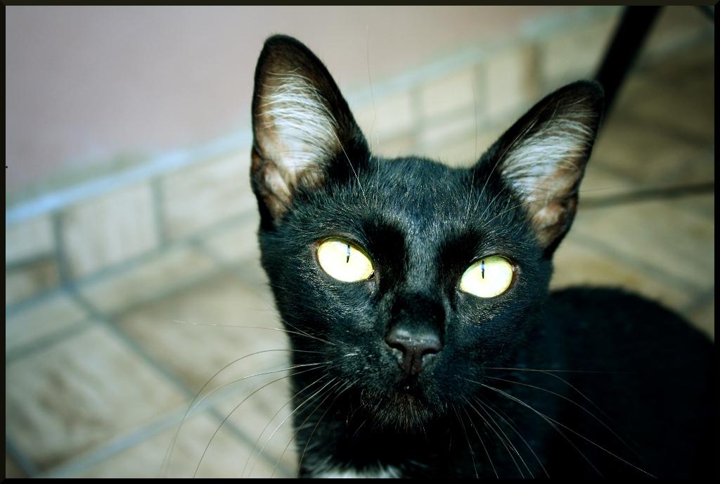Resultado de imagen de Anderson Carlos Bueno dos Santos Cats