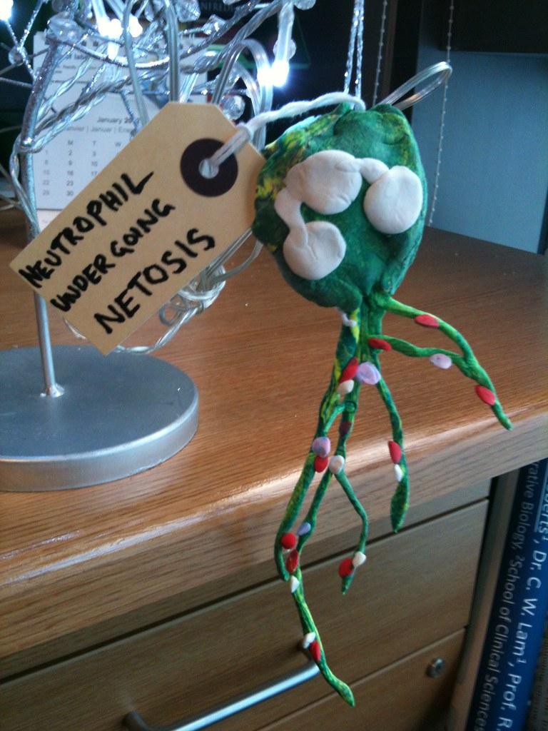 Neutrophil Netosis By Scott Osborne Liverpool