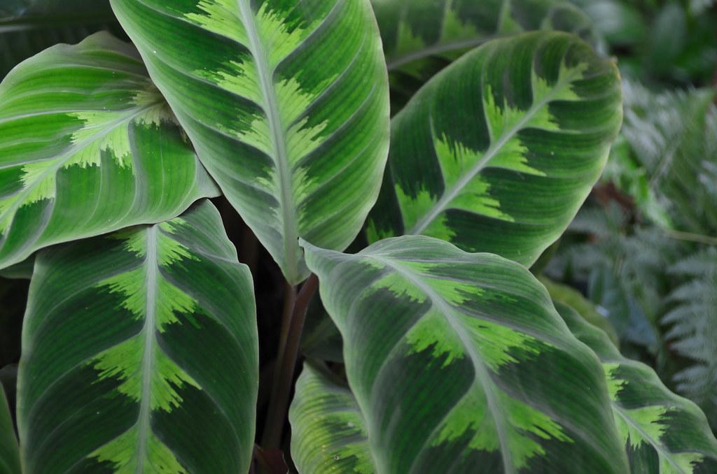 Tropical Plant Leaves Tropical Plant Leaves
