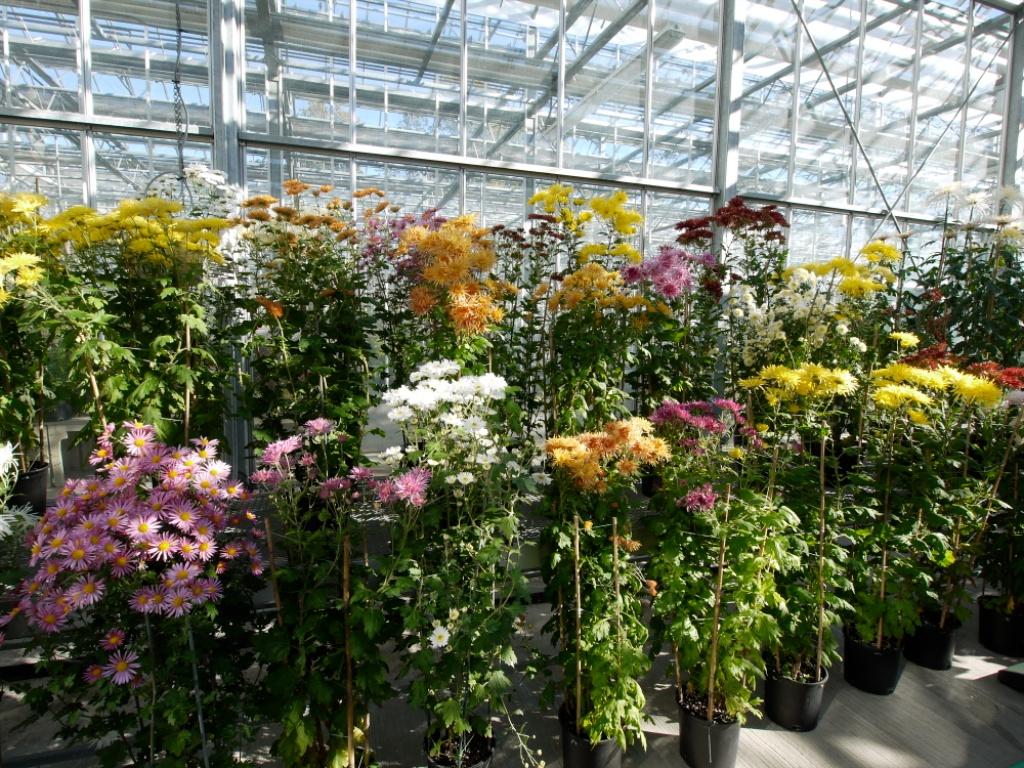 New York Botanical Garden Bronx Ny New York Flickr
