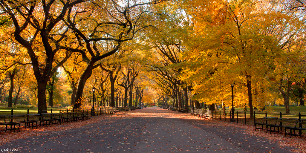 New York - Central Park Autumn Poster | Sold at Abposters.com  |Autumn Central Park Screensavers