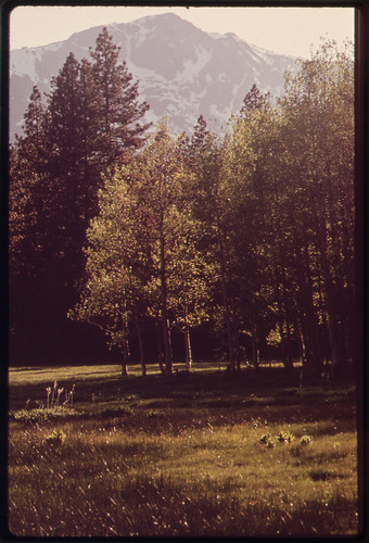 Meadow, 05/1972. | by The U.S. National Archives