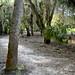Myakka-Boylston Nature Trail-9