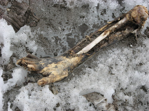 lenin peak avalanche victims the remains of climbers who