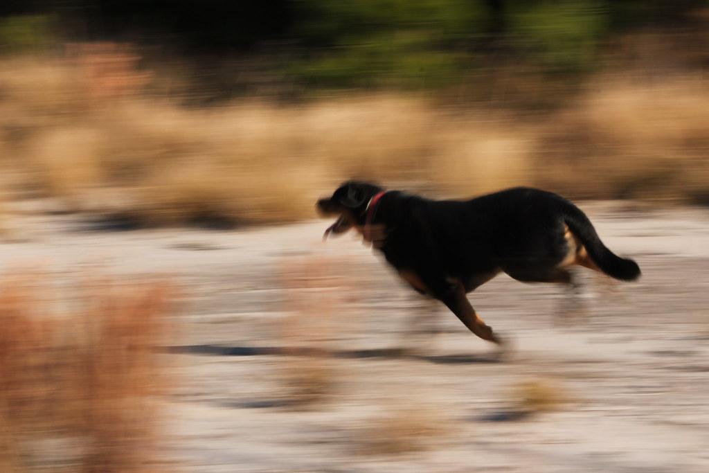Running A Dog Walking Business