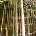Trees Ginkaku