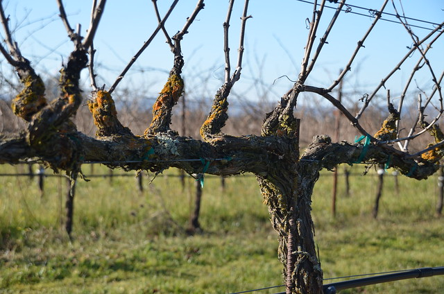 Harvest Home Sonoma