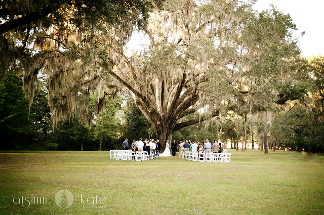 Wedding Tree At Eden Gardens State Park Flickr Photo