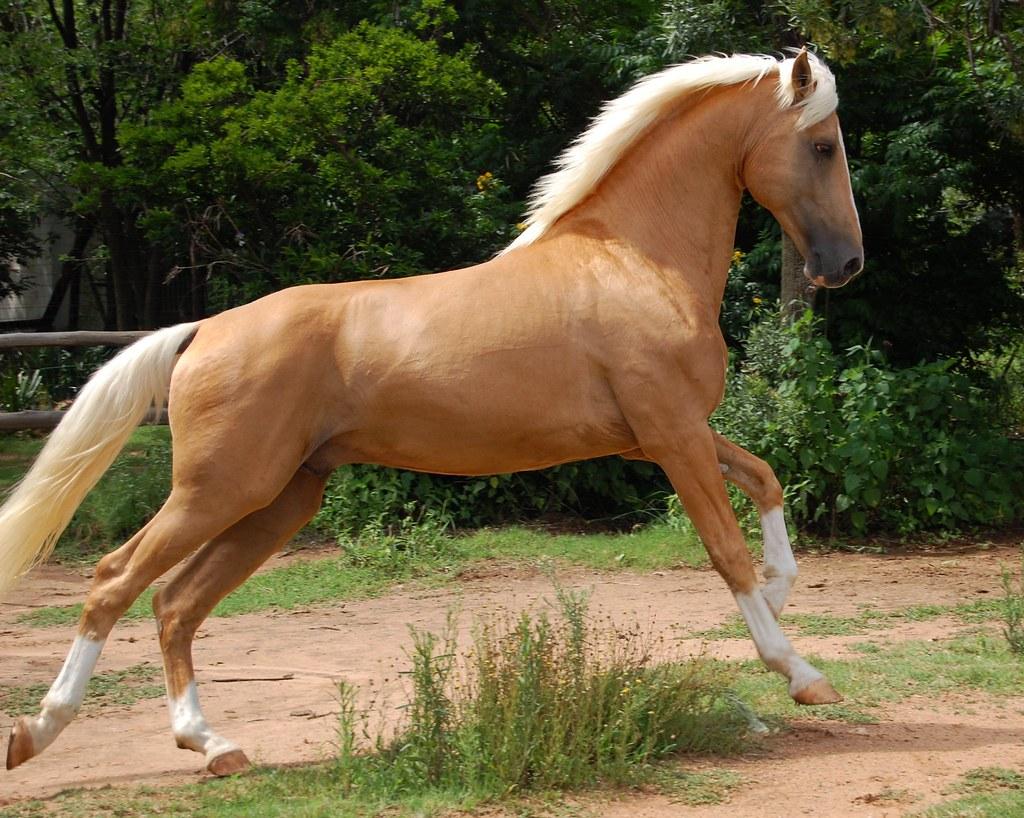 palomino foal - photo #40