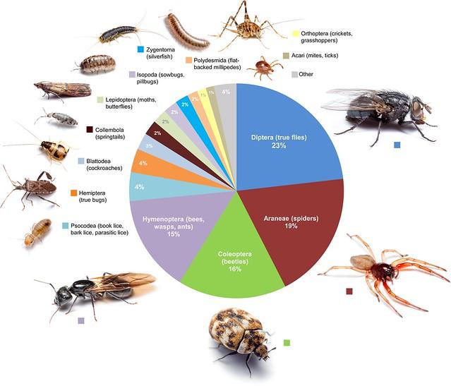 該研究繪製的各類節肢動物在住家的平均比例分布圖。攝影:Matthew Bertone。圖片來源:Bertone et al.。(CC BY 4.0)