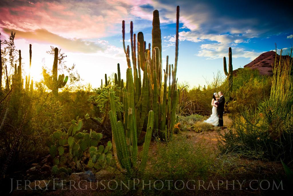 Desert Botanical Gardens Wedding From A Recent Wedding