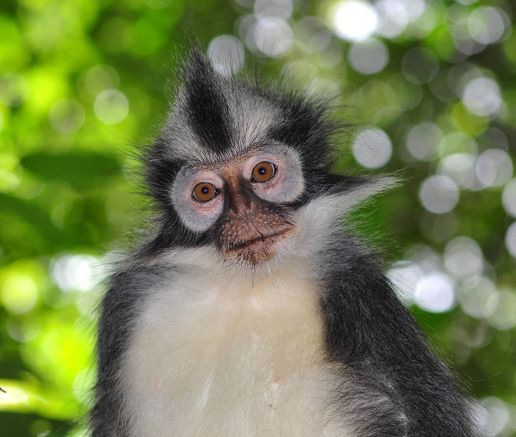 free monkeys