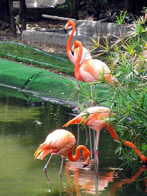 Grand Palladium Colonial Resort Spa Cancun Mexico