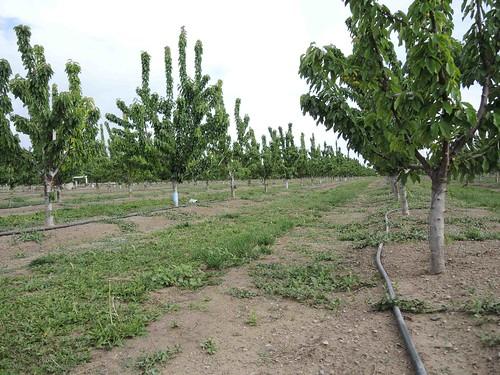 A micro-sprinkler irrigation system