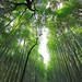 嵐山竹林步道 Arashiyama Bamboo Groves