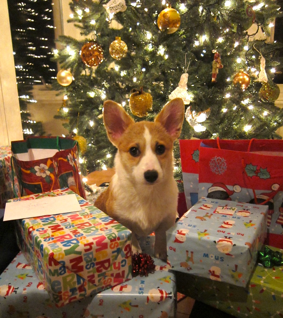 Puppy Love Under The Tree My Folks Were Hoping For A