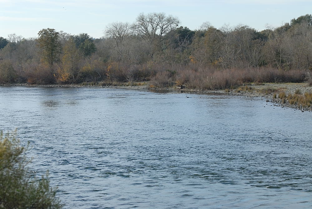 American River Downstream From Nimbus Fish Hatchery Flickr