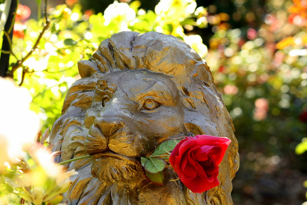 i see a lion with a rose in his mouth i just thought this flickr. Black Bedroom Furniture Sets. Home Design Ideas