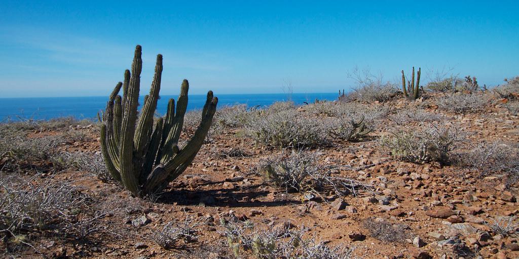 Baja Desert Coast