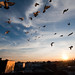 Jesus's Pigeons: Tremont, Bronx