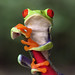 Red-eyed Green Leaf Frog