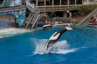 SeaWorld San Diego 2010 349 | by huskie1980