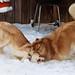 Jenna & Bella snow day!