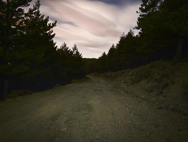 Bosques del Parque Nacional de Sierra Nevada de noche