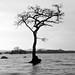 That Tree (1)