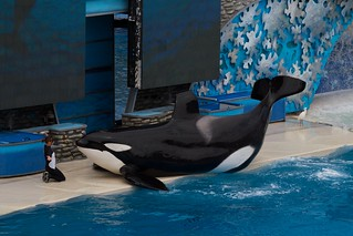 SeaWorld San Diego 2010 306 | by huskie1980