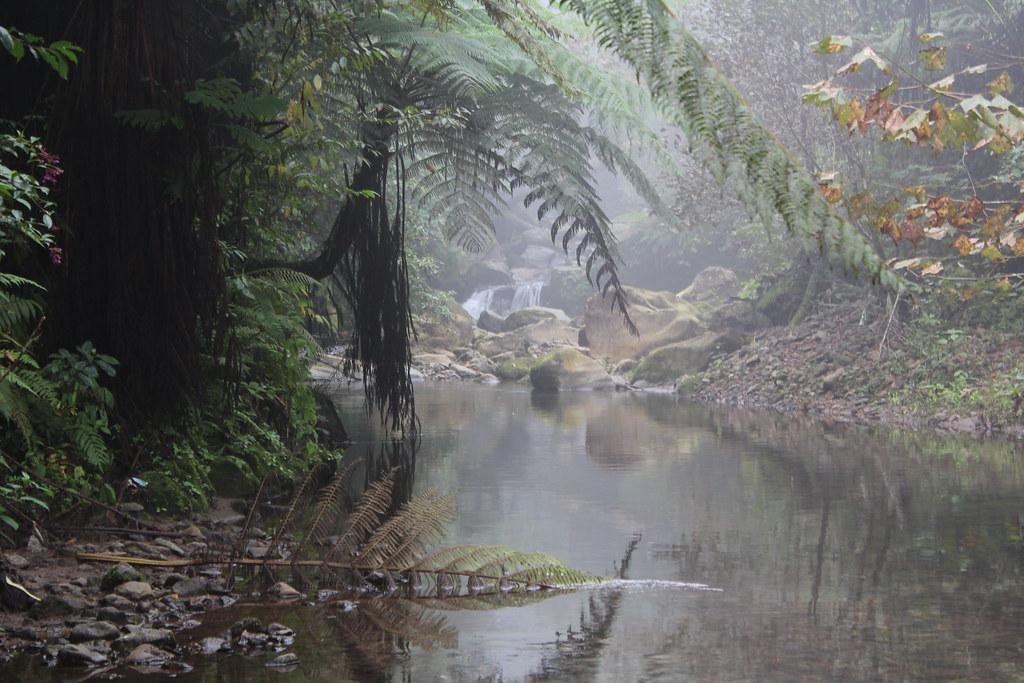 En el bosque de sacsayhuaman zona x - 1 1