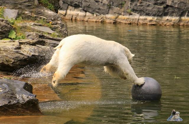 Tierpark Berlin 29.05.2016   079