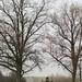 Trees 33501