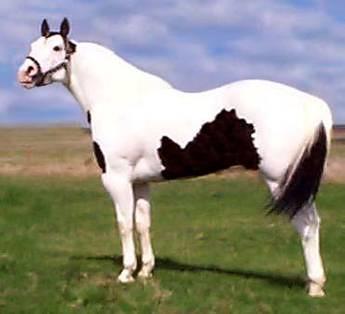 Blue Paint Horse