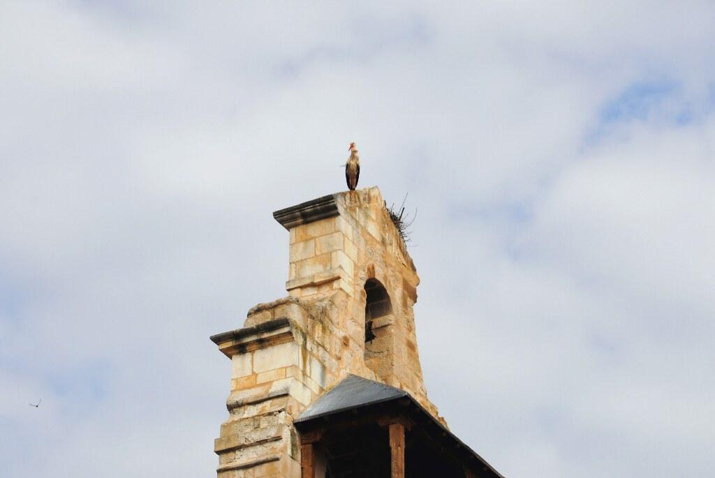 Stork in Salamanca