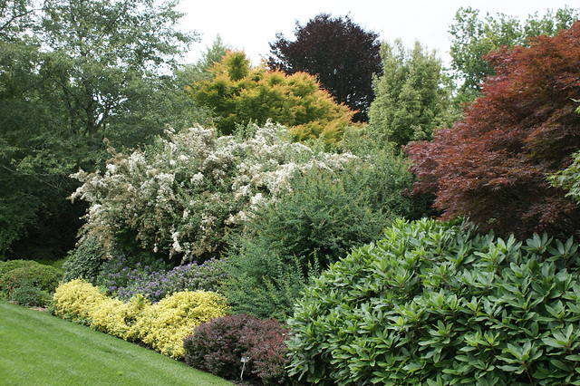 Shrub border layering with acer berberis euonymus and for Shrubs for garden borders