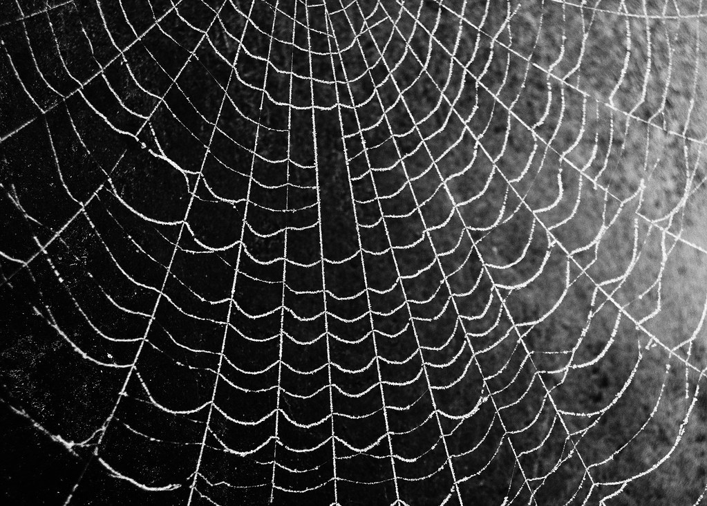 frosty spider web black and white chris flickr