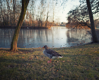 Just A Goose | by Philipp Klinger Photography