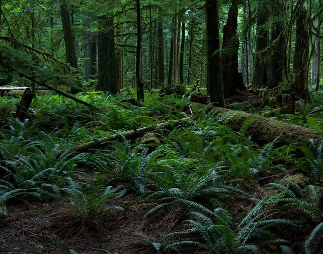 Rainforest Floor | Flickr - Photo Sharing!