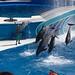 SeaWorld San Diego 2010 407