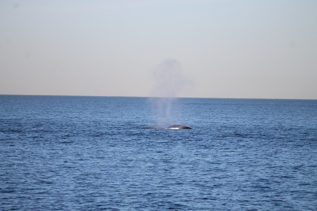 Fin Whale Watching Taken On February 4 2012 On The