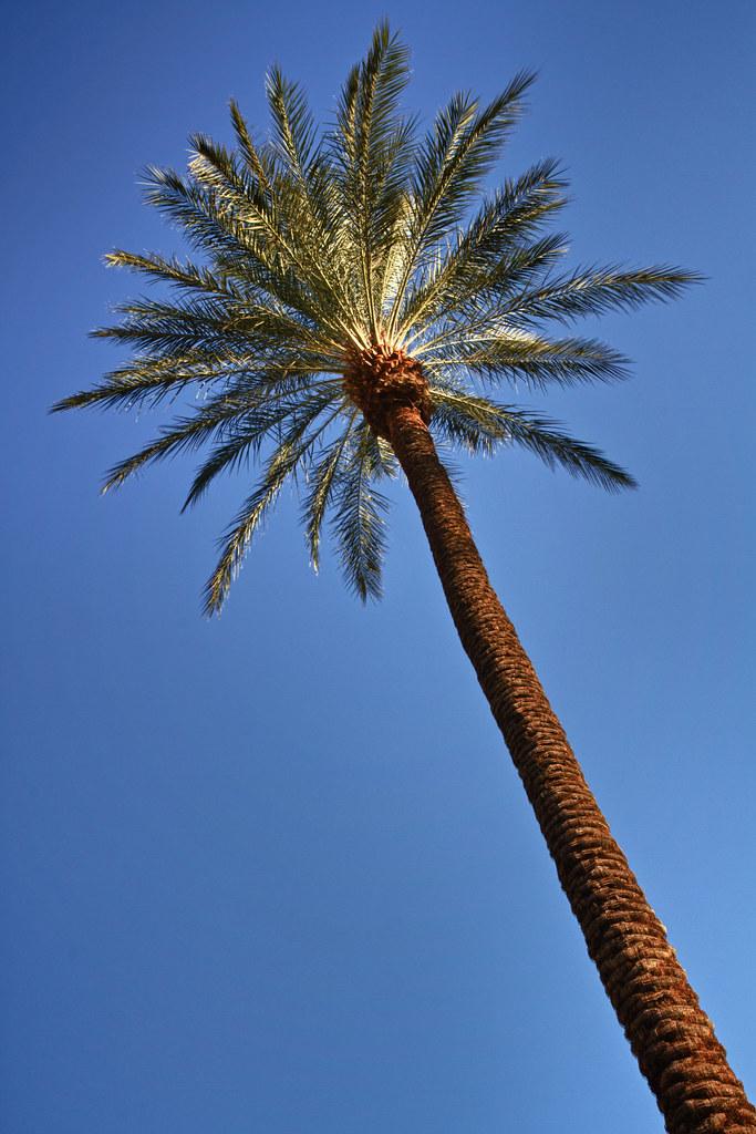 Palm Desert Hotel Rooms