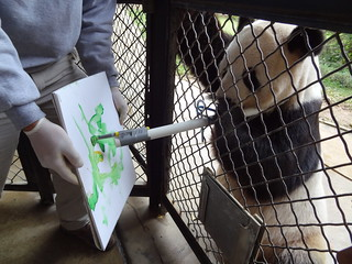 Picasso or Panda? Budding Animal Artists Emerge at the Smithsonian's National Zoo | by Smithsonian's National Zoo