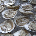 Oysters from different regions taste different, depending on the conditions and environment where they were grown. ©Margaret Pizer/VASG
