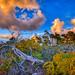 Fallen Dead Tree Jupiter Ridge Natural Area Florida