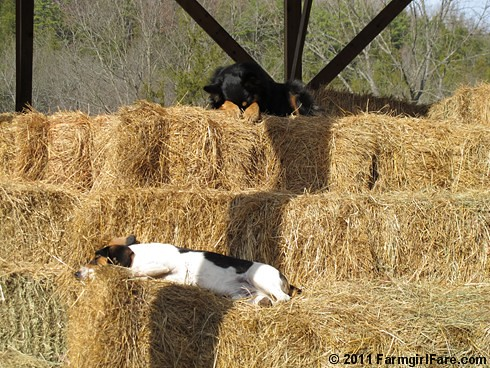 Bert and Bear in holiday recovery mode | by Farmgirl Susan